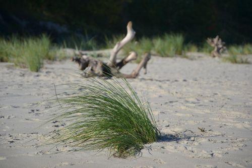 beach summer sand