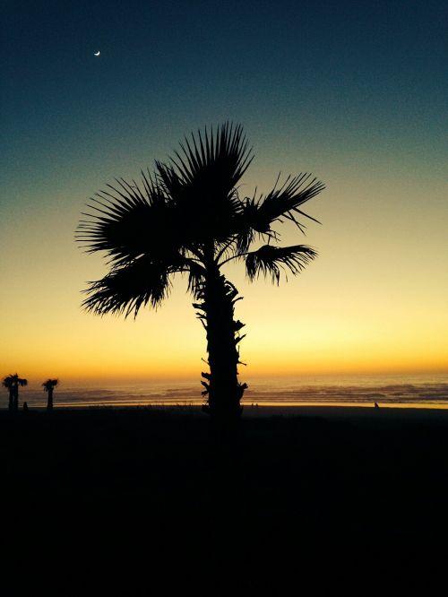 papludimys,palmės,jūra