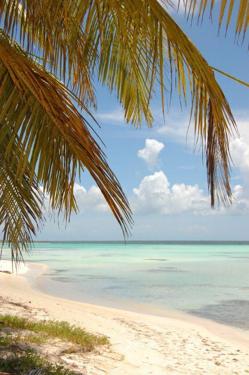 beach seaside seashore