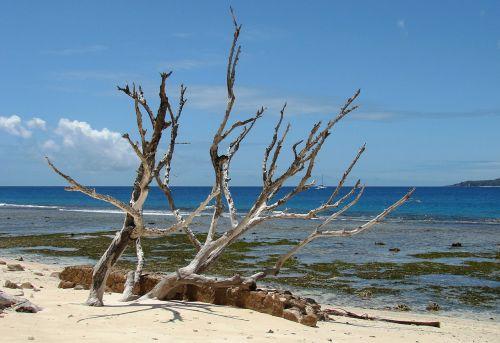 beach wood sea