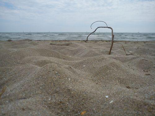 beach branch sand