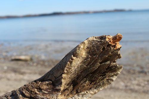 beach baltic sea drift wood