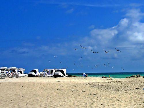 beach miami sea