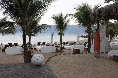 beach coconut trees mar