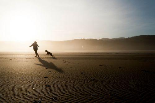 beach dog chase