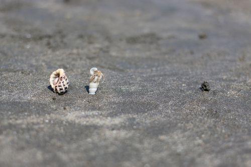 beach shell sand