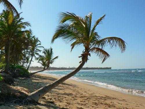 beach tropics sea
