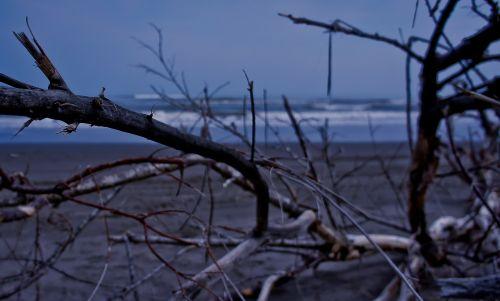 beach cold tree