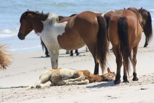 Beach Baby Horse