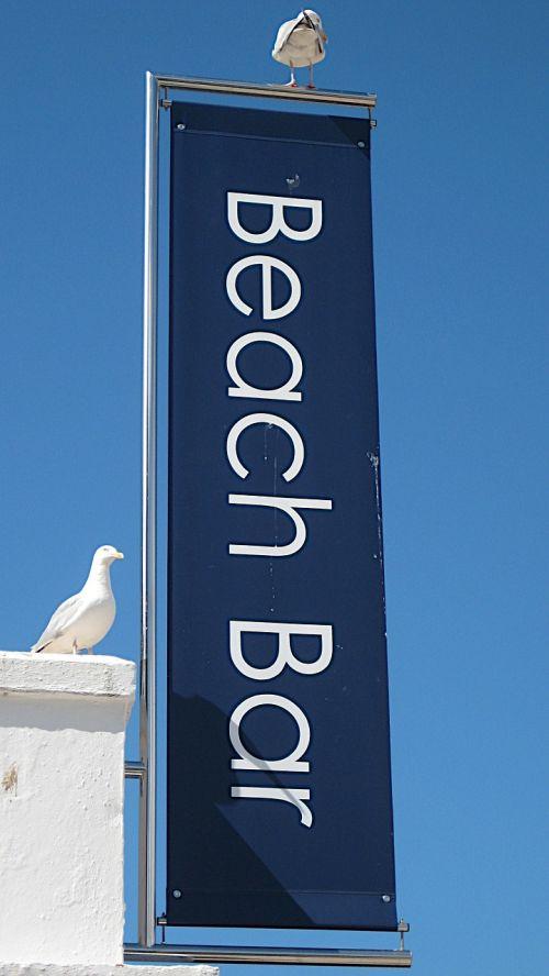 beach bar seagull st ives