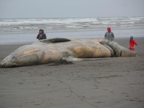 beached whale seaside ocean life