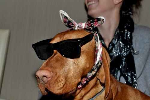 beagle dog loyalty