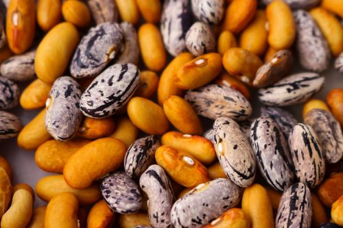 beans haricot dry