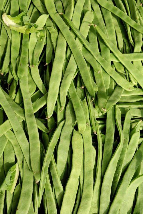 beans  food factory beans  green beans
