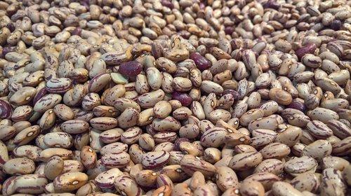 beans  legumes  food