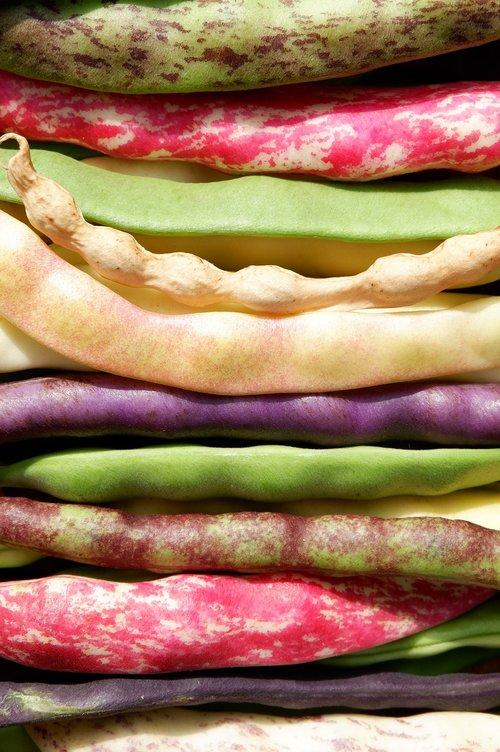 beans  colorful  garden bean