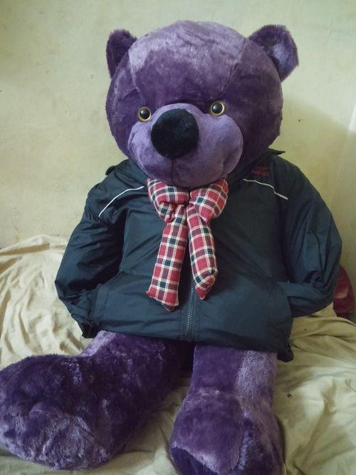 bear toy purple