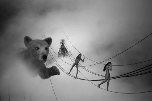 bear black and white fog