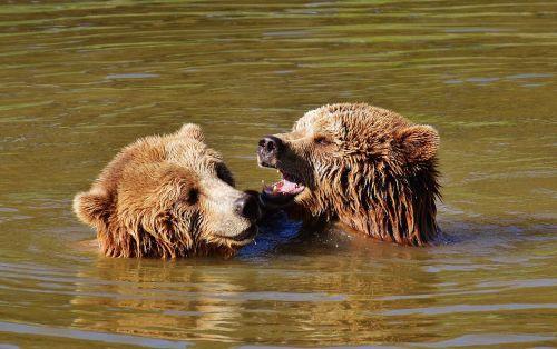 bear water play