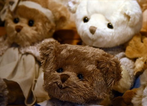 bear toy bear cub