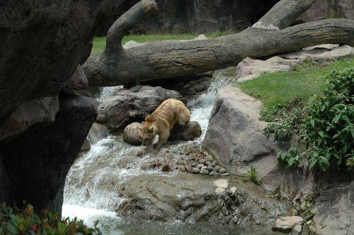 bear zoo mexico