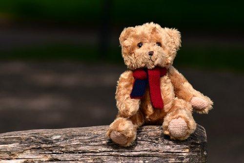 bear  teddy  teddy bear