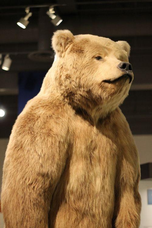 bear museum alaska