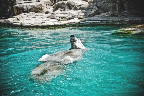 bear water blue