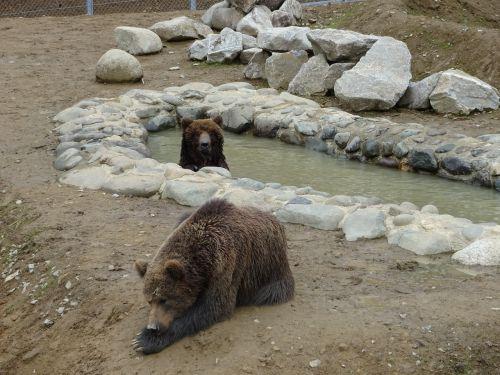 bear park zoo