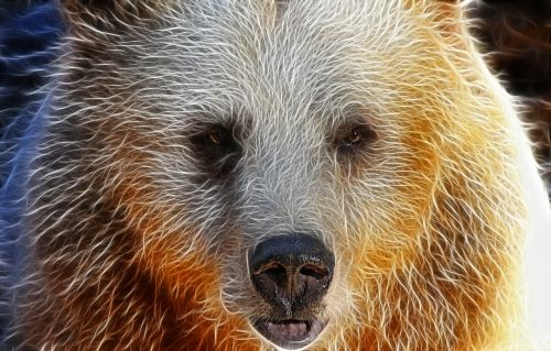 bear face portrait