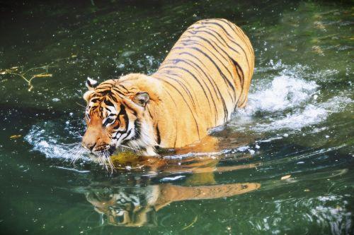 beast animal mammal