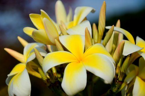 beautiful beautiful flowers bed of flowers