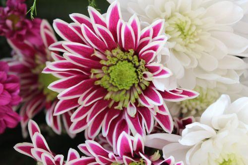 beautiful cheerful flowers