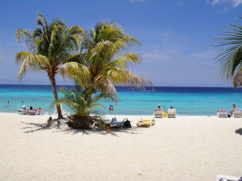 beautiful beach palm trees curacao