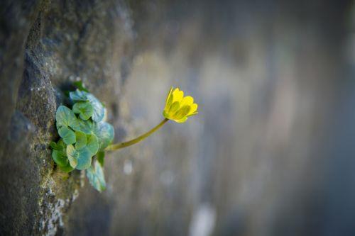 gėlė, gėlės, meilė, natūralus, gamta, valentine, vasara, graži gėlė