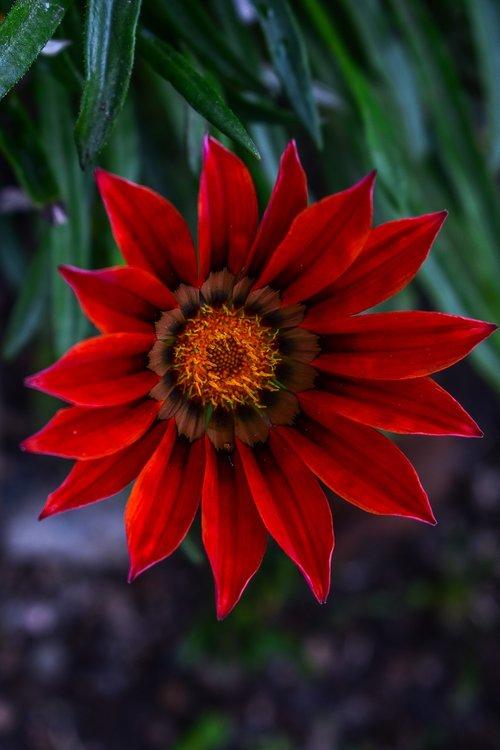beautiful flower  nature  petals beautiful
