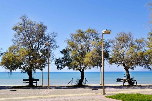 beautiful landscape seascape trees by the sea