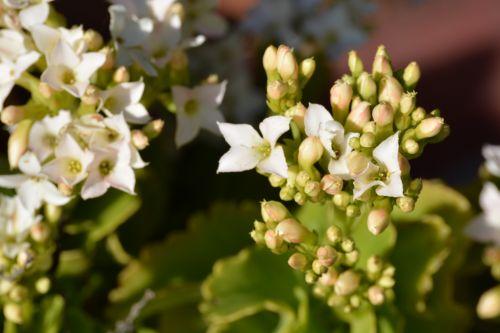 Beautiful White Flowers In Sun
