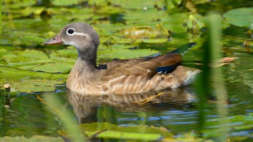 beauty female mandarin