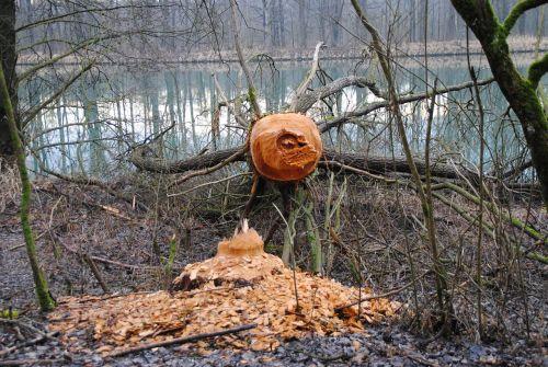 beaver beaver damage rodent