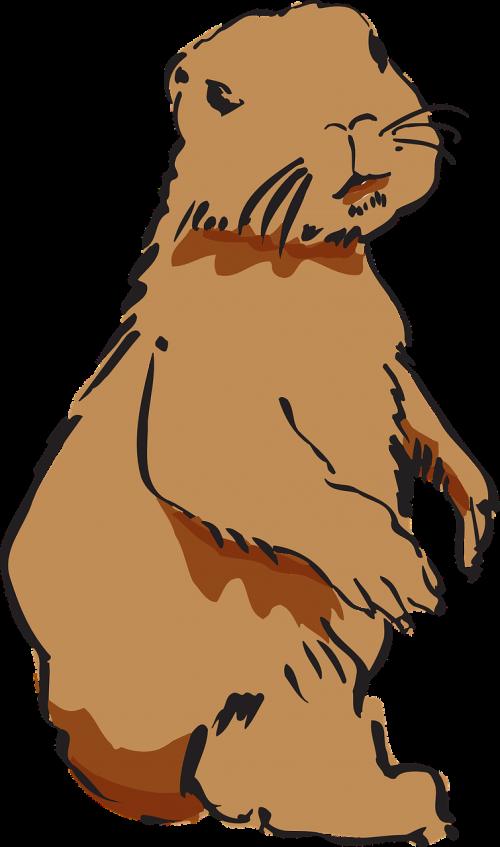 beaver beaver fur beaver pelt