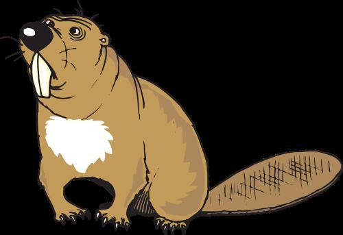 beaver animal tail