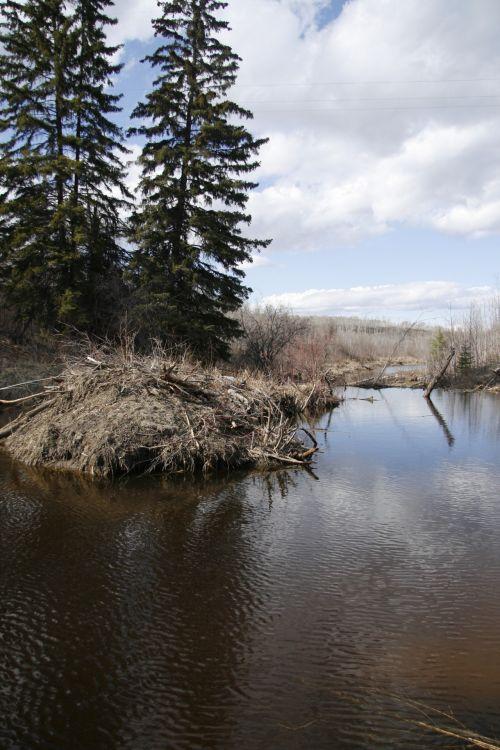 Beaver Dam Lodge Pond