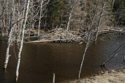Beaver Lodge Pond