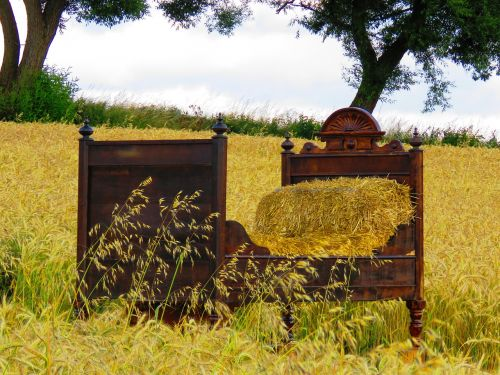 bed cornfield bed in the corn field
