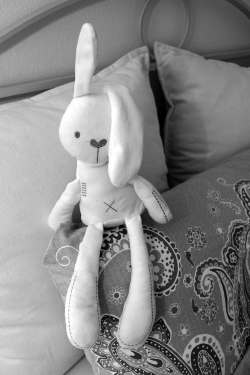 bed  bed bunny  hare