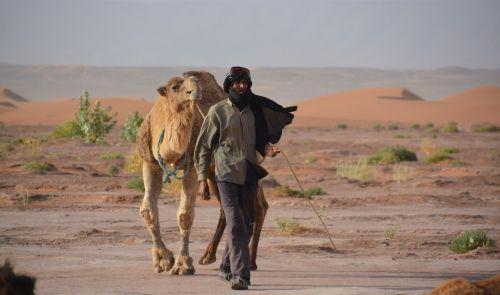 bedouin dromedary sand