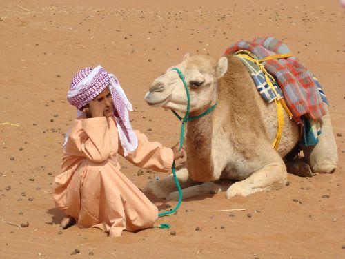bedouin camel desert