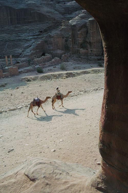 bedouin dromedaries stadium