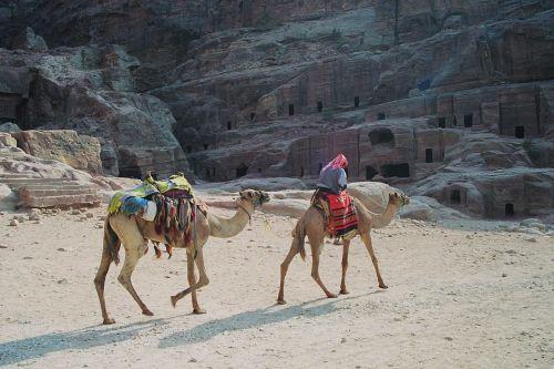 bedouin dromedaries petra